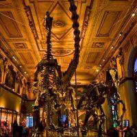 موزه های هنری تاریخی اتریش