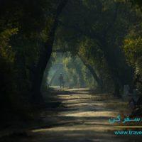 پارک ملی کلادو هند